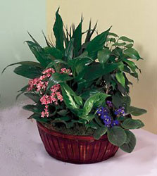 Pittsburgh Florist Green blooming plants delivered in