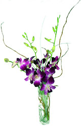 Dendrobium Bud Vase -A local Pittsburgh florist for flowers in Pittsburgh. PA