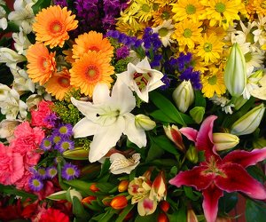 Premium Glory of the Garden -A local Pittsburgh florist for flowers in Pittsburgh. PA