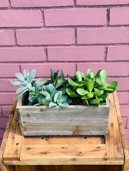 Succulent Garden -A local Pittsburgh florist for flowers in Pittsburgh. PA