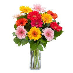 Grand Gerbera -A local Pittsburgh florist for flowers in Pittsburgh. PA