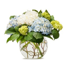 Mighty Hydrangea -A local Pittsburgh florist for flowers in Pittsburgh. PA